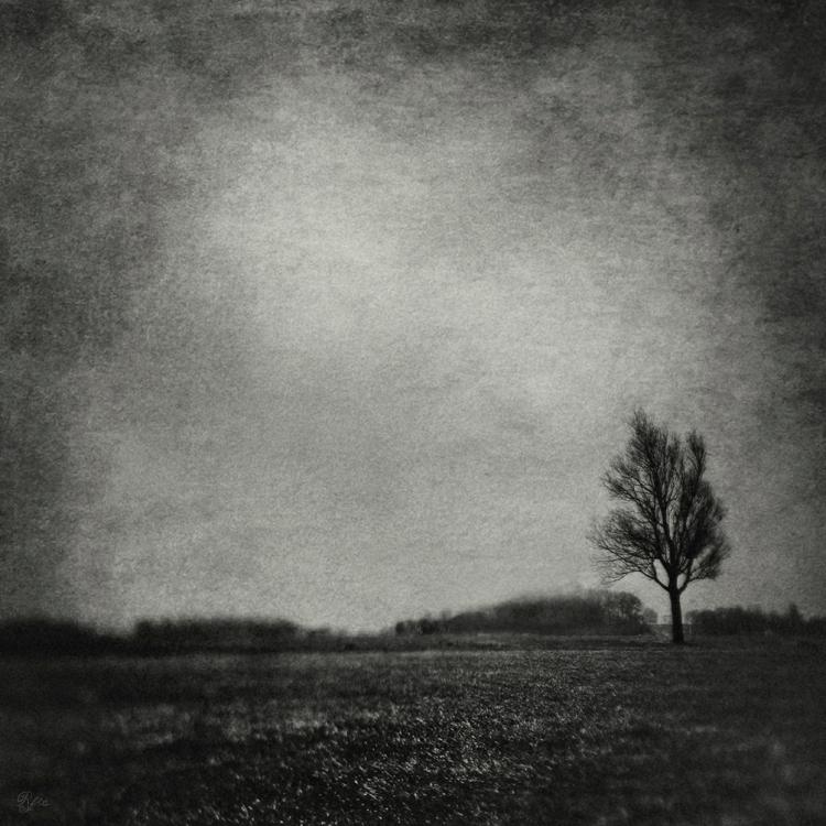31 Days of Stillness / Spirited - www.facebook.com/reflectionsfromwithin<br /> <br /> www.reflectionsfromwithin.com<br /> <br />