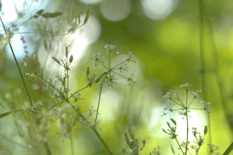 Happy roadside - Fijn dat de gemeente tegenwoordig de bermen wat meer laat voortbestaan, of zelfs inzaait met belangrijke bloemen/grassen voor insecte
