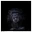 Dark moody portret van een chimp