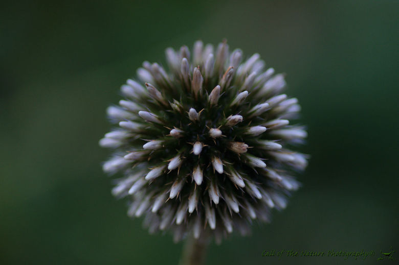 Bloem in een bol - Details van een bloem in de vorm van een bol
