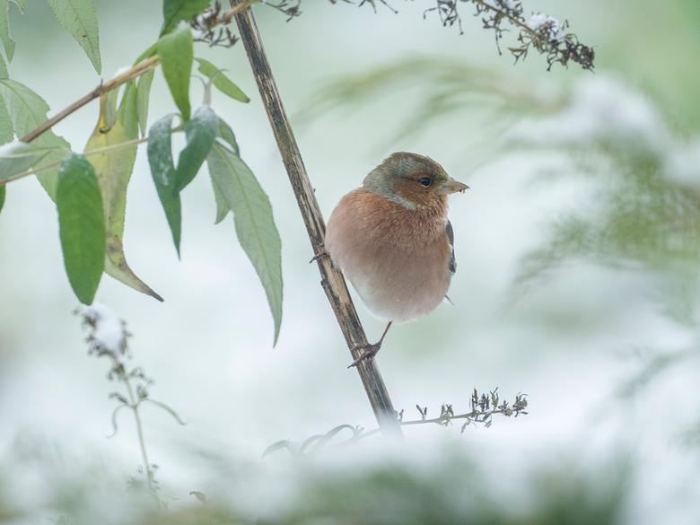 Winter.... - Vogeltje (kon iets scherper) in de sneeuw!