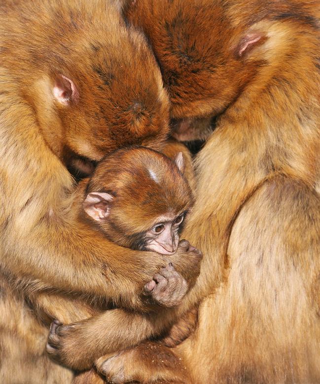 Group Hug.