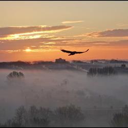 mist.......................
