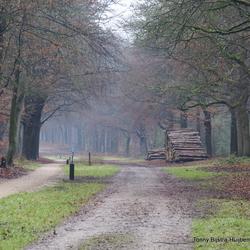 boswandeling Austerlitz 5 januari 2020