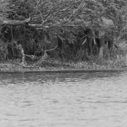 Uganda - Hide and seek - Murchison falls national park