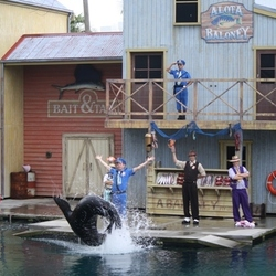Zeeleeuwenshow in Sea World