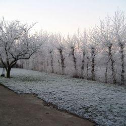 De Tuin in de winter