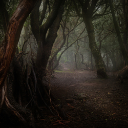 Haunted forrest