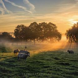 Zonsopkomst in de polder