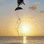 Dolfijn bij zonsondergang