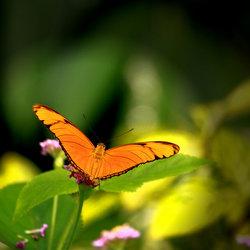 Oranje Boven