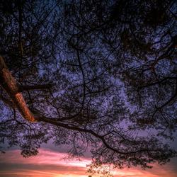 zonsondergang sallandse heuvelrug