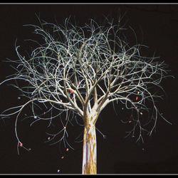 Wonderlijke boom ..