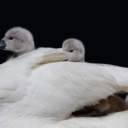 Moeders rug
