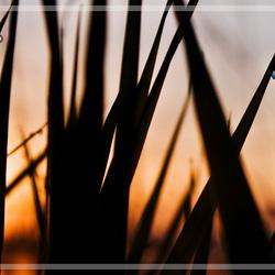 dauw met zonsopkomst