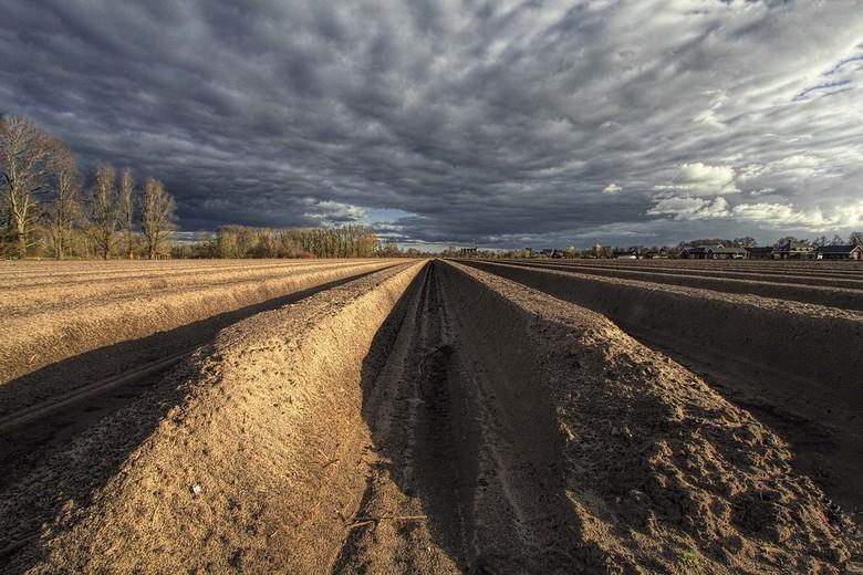pulling lines - Een asperge veld vanuit een ander perspectief bekeken.