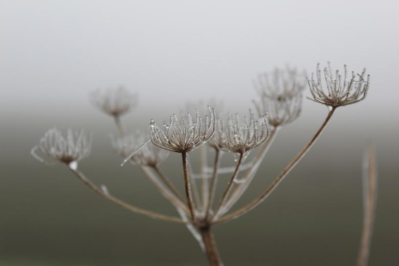 Bevroren - Dit was zo'n winterochtend met mooi diffuus licht en mistig weer. Ontzettend veel foto's gemaakt natuurlijk... Dit vond ik zelf e
