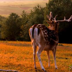 alle zoogdieren houden van een mooie zonsondergang