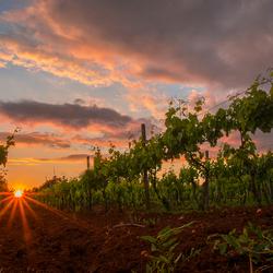 Winegarden!