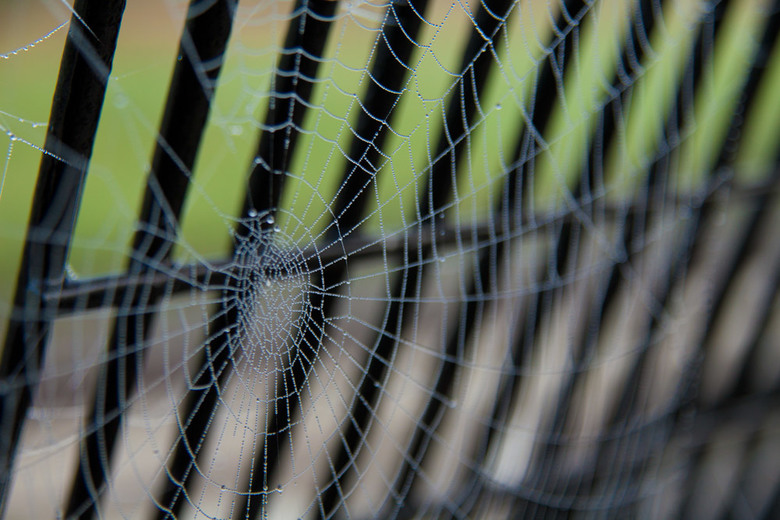 Web in the Mist - --