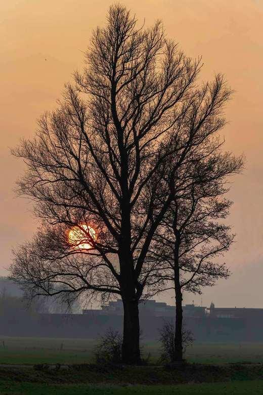Einde van de dag - In de late namiddag laat de zon nog even het kunstje zien.