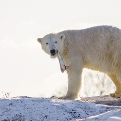 On the arctic