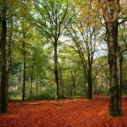 Bos bij Austerlitz
