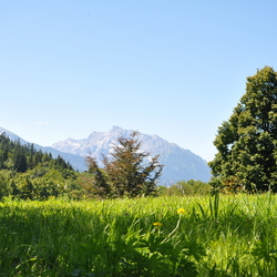 De alpenweide