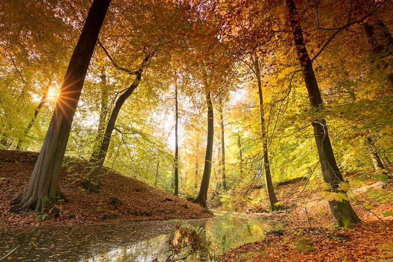 Herfst op de Zijperberg