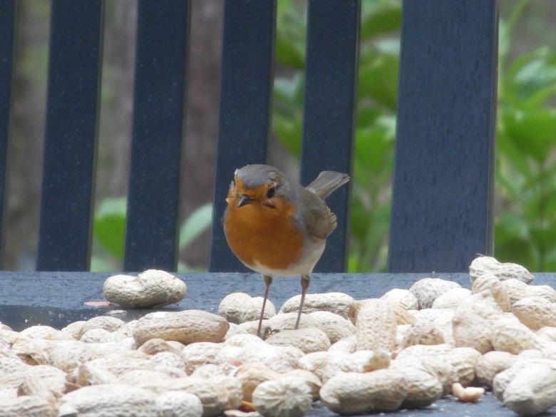 Grote nootjes, kleine vogel...