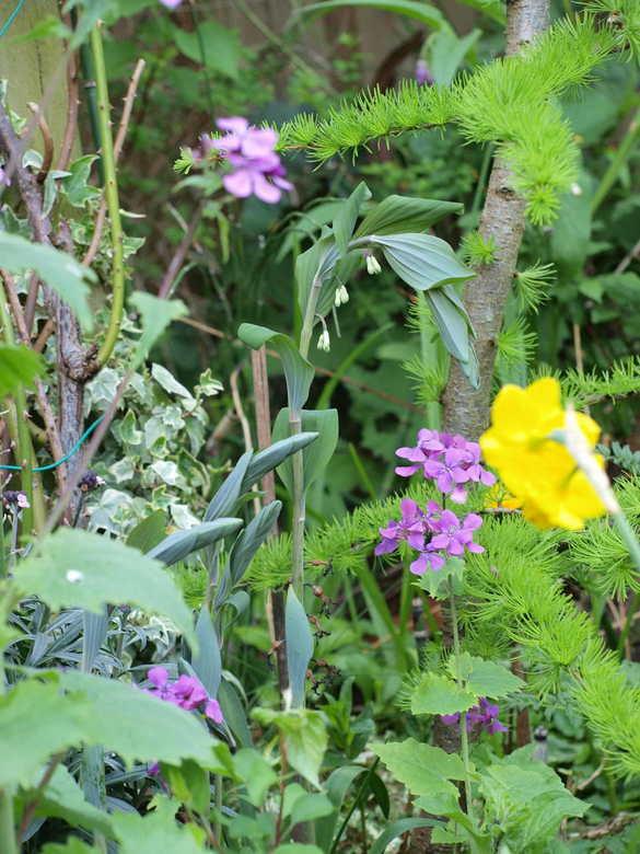 tuintje - zomaar `n stukkie tuin...