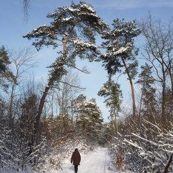 De winter van......2011.