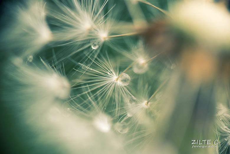 Little drops .... -