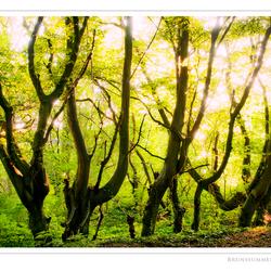 Het gouden bos