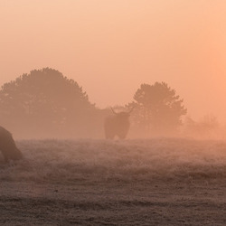 Highlanders in the fog