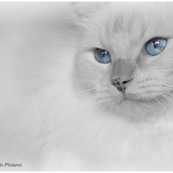 Famous 'blue eyes'