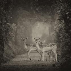 The old deer lane