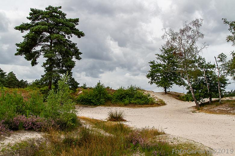 Brunssummerheide  - Dit is de laatste die ik post van de Brunssummerheide en gebied waar je uren kunt wandelen.<br /> gr. Gerard