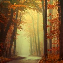 Sigh of Autumn.
