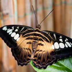 vlinder in Botanische Tuinen Utrecht