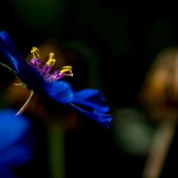 Blauw met geel