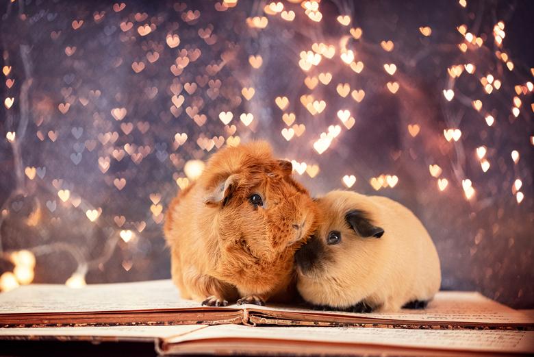 Sien &amp; Pien - Sien en Pien doen eens lief. <br /> <br /> Ik heb een blog geschreven over hoe je de hartjes bokeh krijgt: https://www.miepsthegui