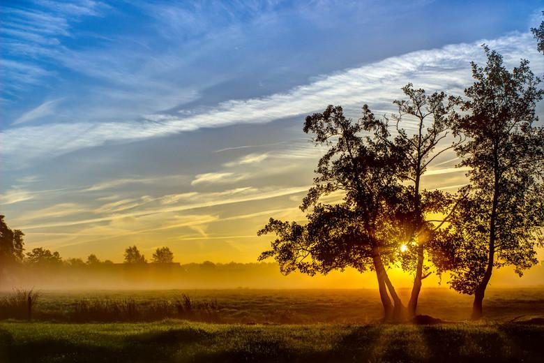 Golden tree - Tree in the morning sun.<br /> <br /> Een van de mooiere ochtenden in Friesland die een erg rustgevend beeld geeft. &#039;Golden tree&