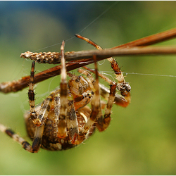 Busy spider.......
