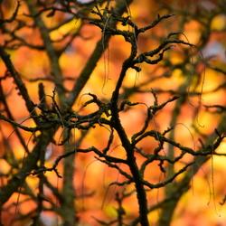 De gouden kleuren van de herfst