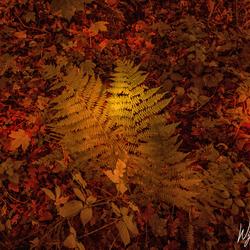Green fern with still image
