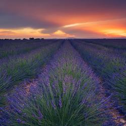 Lavender Sunset Valensole