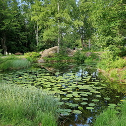 Bayerische Wald.