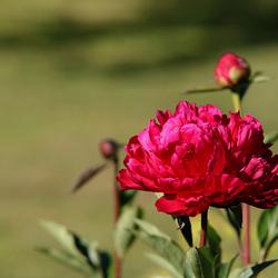 'Flowers