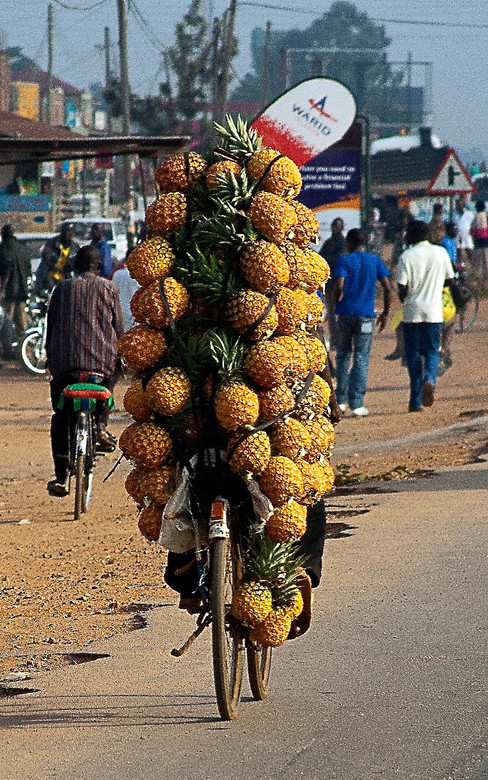 Pineapple fresh cut -